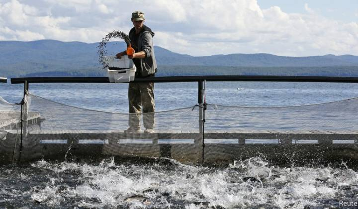 Immagine articolo: Fino al 50% di contributo a fondo perduto per realizzare allevamenti di pesci in Sicilia, grazie alla misura 2.52 del FEAMP