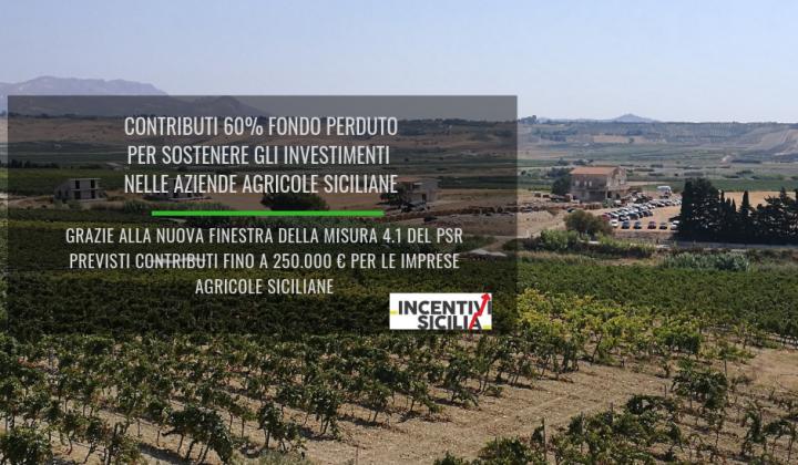 Immagine articolo: Nuova finestra della misura 4.1 PSR Sicilia: contributi 60% fondo perduto per sostenere gli investimenti nelle aziende agricole siciliane