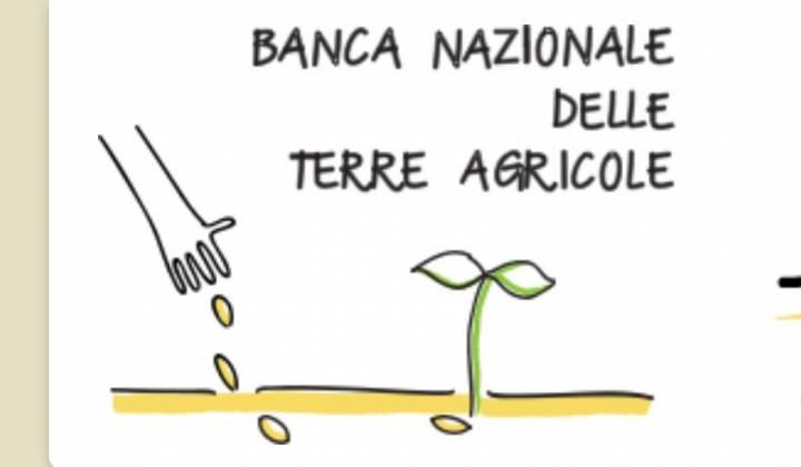 Immagine articolo: Banca delle Terre: al via la 2° asta per aggiudicarsi i terreni messi in vendita dall'ISMEA.  Agevolazioni per i giovani che vogliano acquistare i terreni.