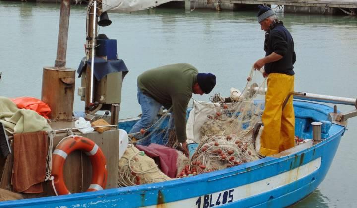 Immagine articolo: Solo in Sicilia: Bando per la promozione del capitale umano e la creazione posti di lavoro con la misura 1.29 del FEAMP Sicilia