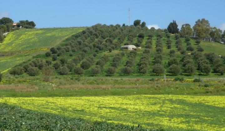 Immagine articolo: Bando per acquistare terreni agricoli: disponibili 125 terreni in Sicilia e mutui agevolati ai giovani agricoltori