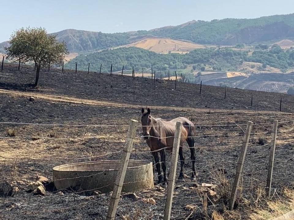 Immagine articolo: Bando lampo per richiedere i contributi legati all'emergenza incendi: fino a 20.000 ad azienda agricola.